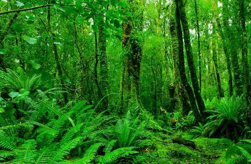 Dense New Zealand Rainforest