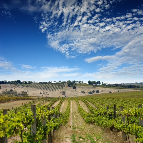 What are Three of the Best Red Wine Regions in Australia?